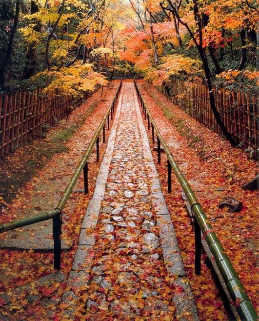 树叶落在地上时,自然是重的面着地