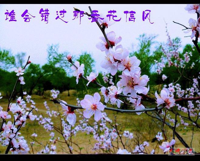 山茶花树简笔画步骤